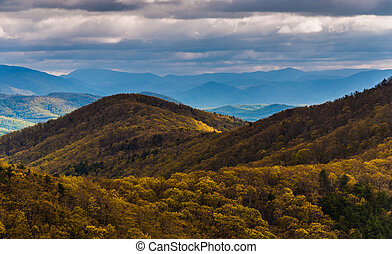 Spring yellows in the Blue Ridge Mountains, seen from Skyline Drive in Shenandoah National Park, Virginia.