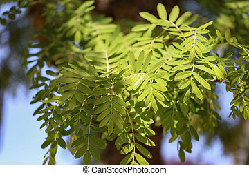 Young foliage in the sun