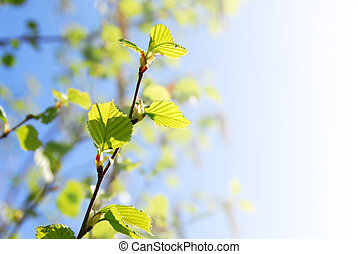 Young spring green leaves on faded background with copy space