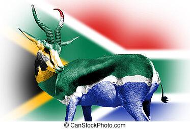 springbock, emballé, dans, sud-africain