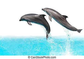 springe, delfiner