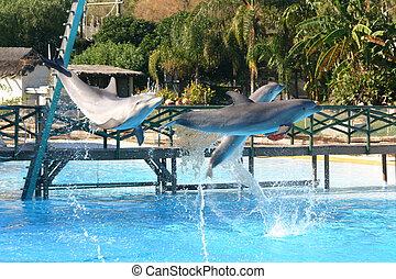 springen, delphine