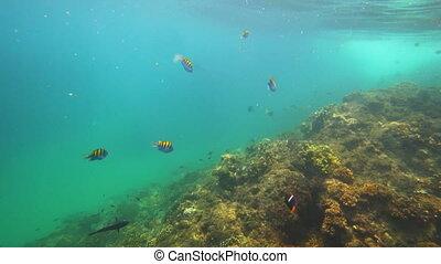 springen, pazifischer ozean, mit, bunte, fische