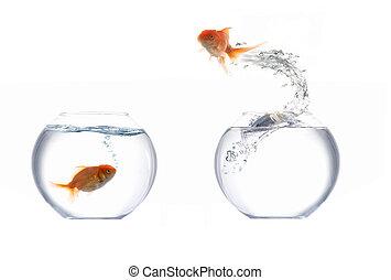 springende , goldenes, fische