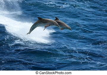 springende , stürmisches meer, delphine