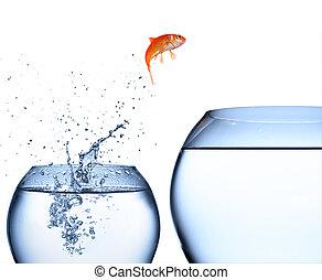 springende , wasser, heraus, goldfisch