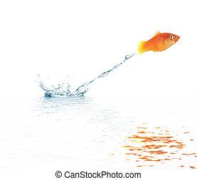springt, goudvis