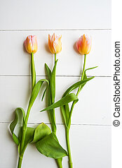 Springt time. Tulips on the wooden background.