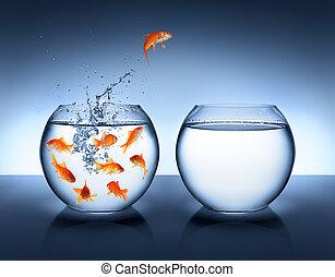 springt, verbetering, -, goudvis