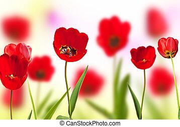 springtime., 草地, 紅色, 鬱金香