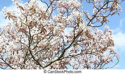 Springtime - Blossoms in springtime