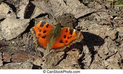 butterfly - springtime,  butterfly in the sun