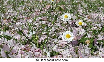 daisies and pink petals
