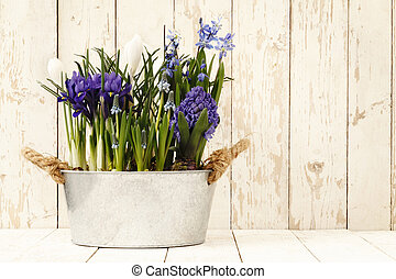 springtime, flowers composition in pots isolated on wooden white blank background