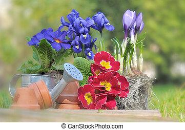 springtime flowers in garden