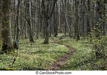 Springtime footpath