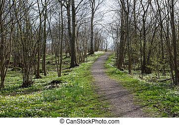 Springtime forest view