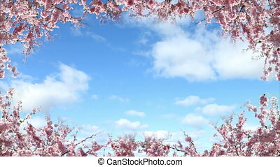 Springtime - Frame of flowering cherries