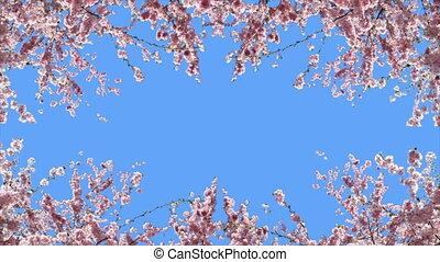 Frame of flowering cherries