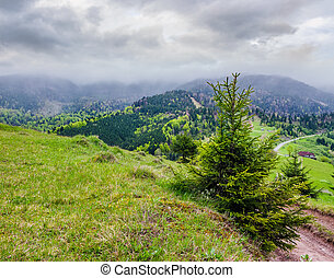 springtime in Carpathian mountains. beautiful scenery on a...
