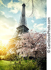 Springtime in Paris. Eiffel tower (toned image)