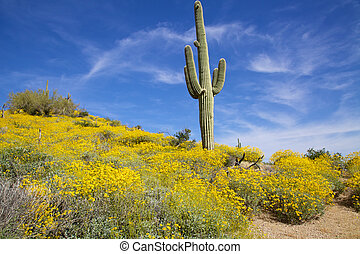 Springtime in the Arizona Desert