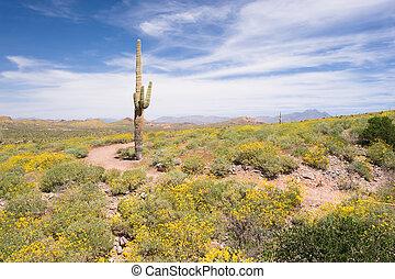 Springtime in the desert