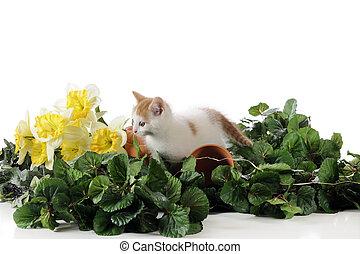 Springtime Kitty