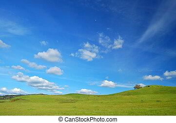 springtime landscape - springtime meadow and trees