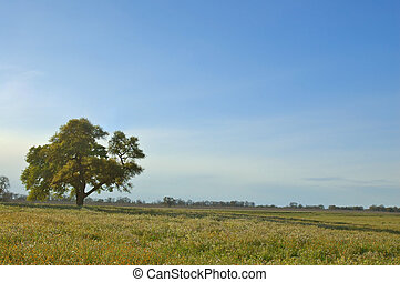 tree in a spring meadow
