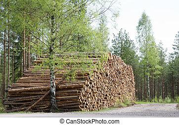Springtime logs