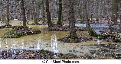 springtime, manhã, em, wetland, floresta