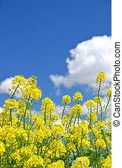 springtime meadow - flowery meadow in the spring