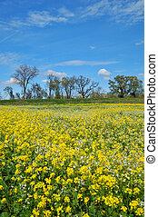 springtime meadow - wildflower meadow in springtime
