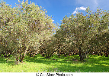 springtime orchard - orchard in springtime