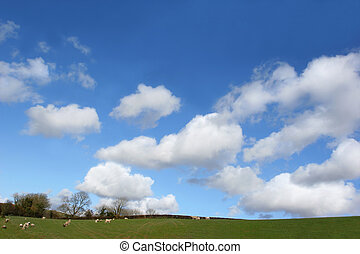 Springtime Pasture - Fields in spring with sheep and lambs,...