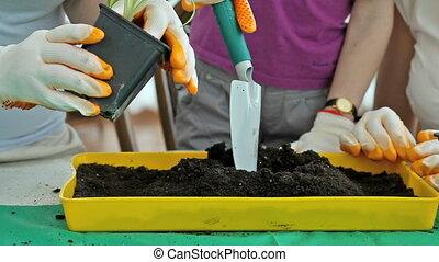 Springtime planting - Close-up of plant replanting into a...