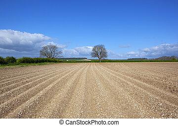 springtime potato field