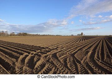 springtime potato rows