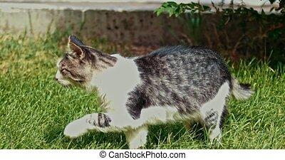 Springtime shot of homeless cat on grass enjoying sun