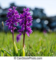 Springtime symbol