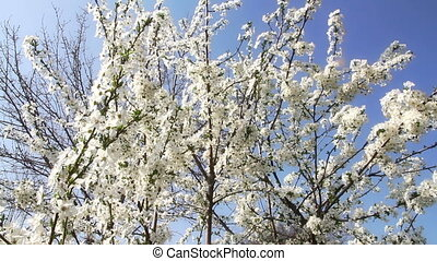 Springtime Tree Flowers