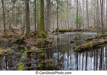 Springtime wet mixed forest with standing water