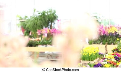 springtime, woman florist - spring concept, woman florist...