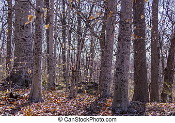 Springtime woods with grafitti