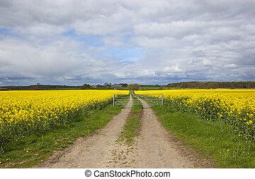 Springtime yellow flowering rapeseed crop