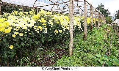Sprinkle in flower green house