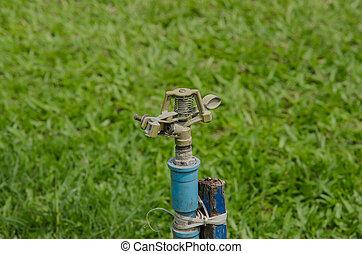 sprinkler, bewässernd pflanzen, in, kleingarten