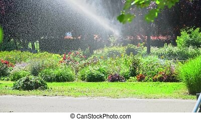 Sprinkler distributes water over the plants in the park on a hot sunny day