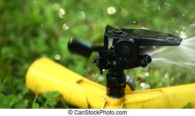 sprinkler., foyer., jardin, cadre, élevé, taux, sélectif